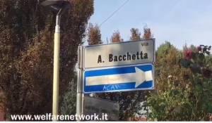 Crema Taglio alberi di Via Bacchetta.M5S,Verdi e Fiab criticano la giunta Bonaldi (Video)