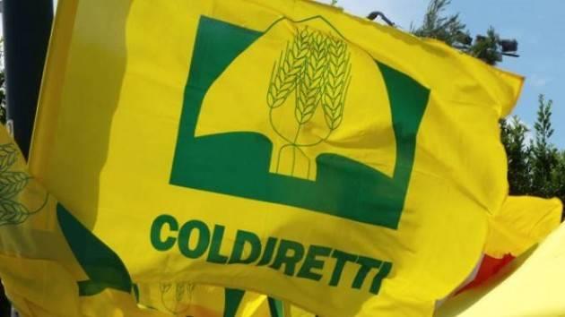 Roma: mercoledì 7 novembre Assemblea elettiva Nazionale Coldiretti