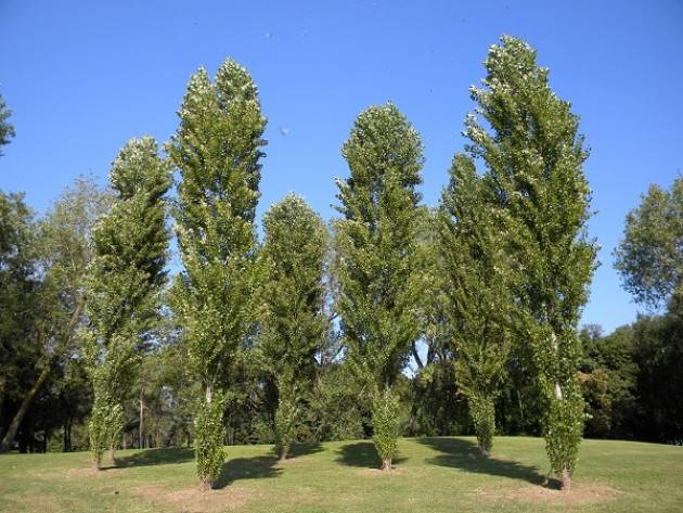Cremona: al via l'iniziativa 'Regala un albero alla tua Città'