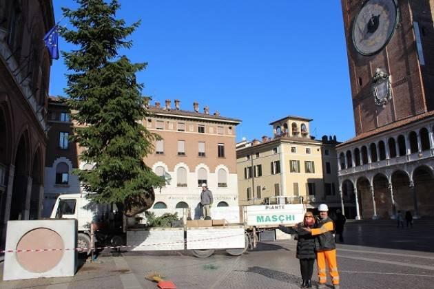 Cremona: L'albero di Natale di piazza del Comune crescerà alla scuola infanzia del Boschetto