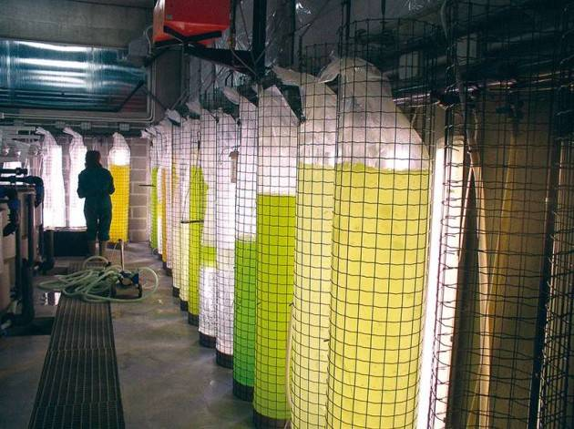 Istituto Spallanzani di Rivolta d'Adda a Milano presenta ricerche su microalghe e acquacoltura