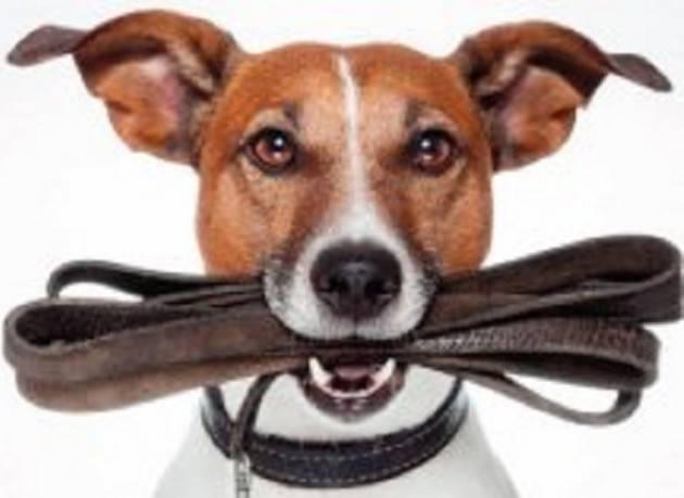 Cremona: proprietari di cani, dal 5 marzo il corso per ottenere il patentino