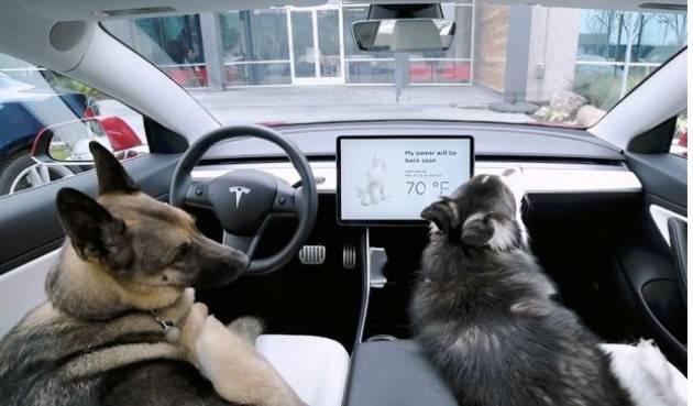 ZEUS Tesla, arriva il Dog Mode per tenere al fresco i cani lasciati in auto