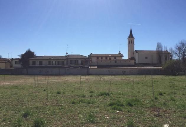 Galimberti: «Ecco i sessanta alberi che porteranno ombra nel parco del Boschetto»