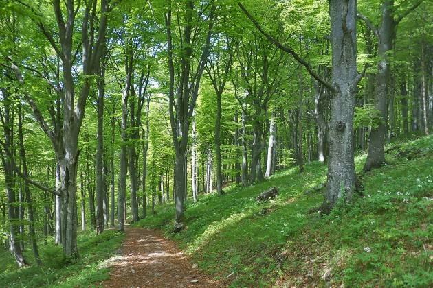 Il Bosco, una risorsa da valorizzare ERSAF presenta l'XI Rapporto sullo stato delle Foreste in Lombardia