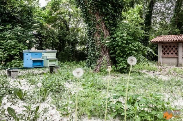 Cremona: posizionato il primo apiario urbano cittadino