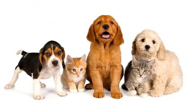 Lombardia PILONI (PD): 'GRAZIE A NOI VISITE GRATUITE PER GLI ANIMALI DOMESTICI '