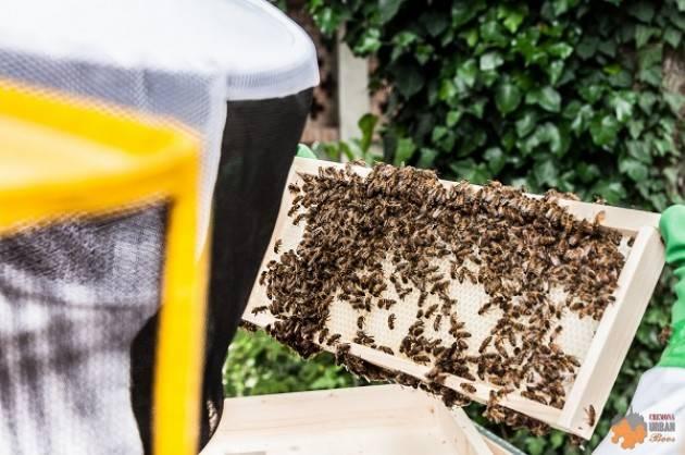 Il 15 giugno visita gratuita all'apiario Cremona Urban Bees