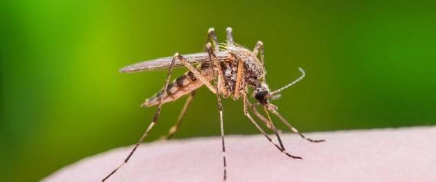 Cremona Tra il 22 e il 23 luglio proseguiranno gli interventi anti zanzare in varie zone della città