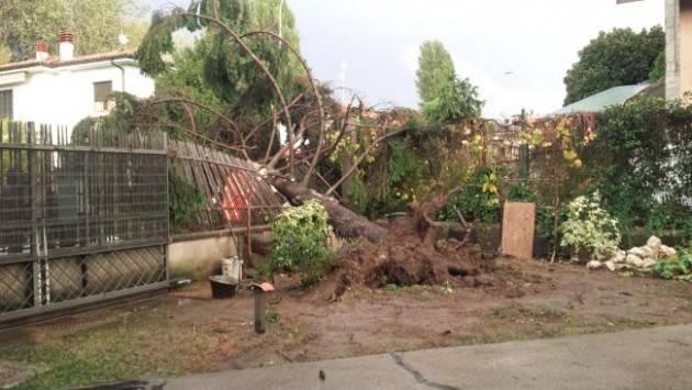 Coldiretti Maltempo, grandine e vento in Lombardia: sale la conta dei danni nelle campagne