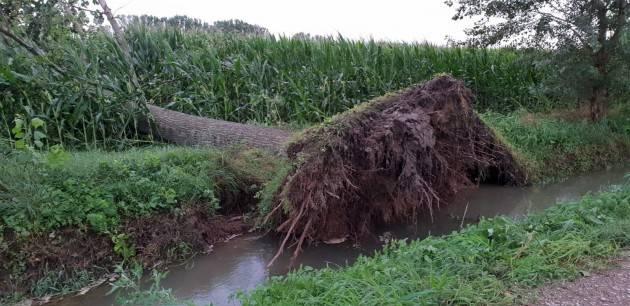 VENTO E BOMBA D'ACQUA in Lombardia Nuova ondata di maltempo, 'gravissimi danni ai campi di mais e alle strutture'