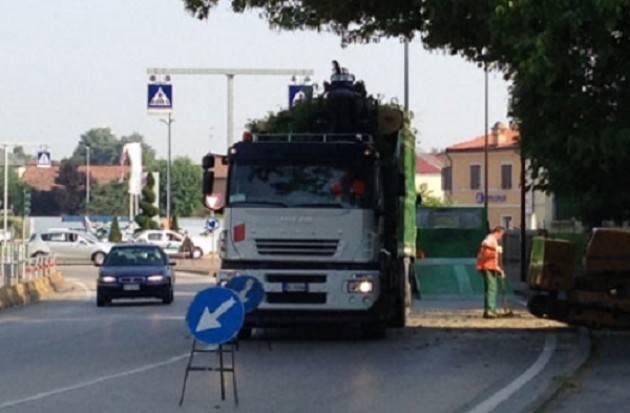 Casalmaggiore: abbattuti 43 pioppi cipressini per tutelare l'incolumità pubblica, ma l'intervento crea polemiche