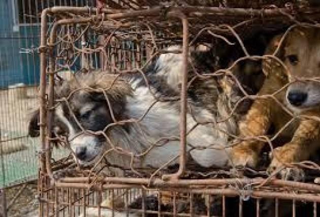 ADUC Vita da cani. Il mercato dei 'cani clandestini'
