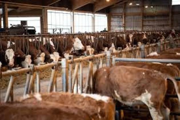 FFF L'Agrozootecnica e' Cremona,lo dicono i numeri, lo dicono le aziende lo dice il settore | Fridays For Future Cremona (FFFCr)