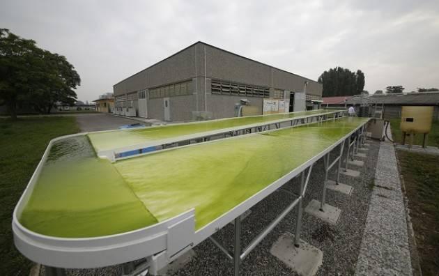 Istituto Spallanzani di Rivolta d'Adda (CR)  a Rimini per presentare le sue ricerche sulle microalghe