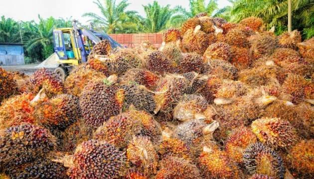 Indonesia Piantagioni illegali olio di palma: uccisi giornalisti indonesiani Firma petizione