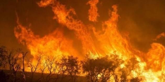 2019: un anno di fuoco per le foreste del nostro pianeta