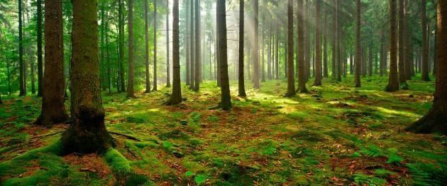 LNews-Focus.LOMBARDIA,70.000 ETTARI FORESTE CERTIFICATE:QUASI IL DOPPIO IN UN ANNO.DA REGIONE 18 MILIONI PER CONTRASTO CALAMITA'