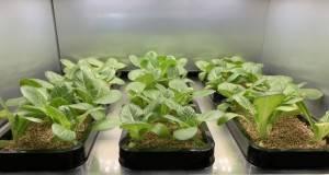 ZEUS LG presenta l'orto da salotto Per coltivare le verdure in casa.