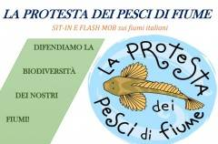 LA PROTESTA DEI PESCI DI FIUME SIT-IN E FLASH MOB SUI TORRENTI LOMBARDI