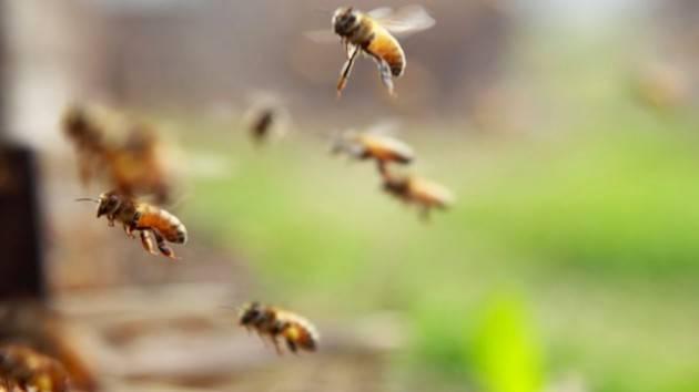 Clima, il caldo riporta al lavoro le api