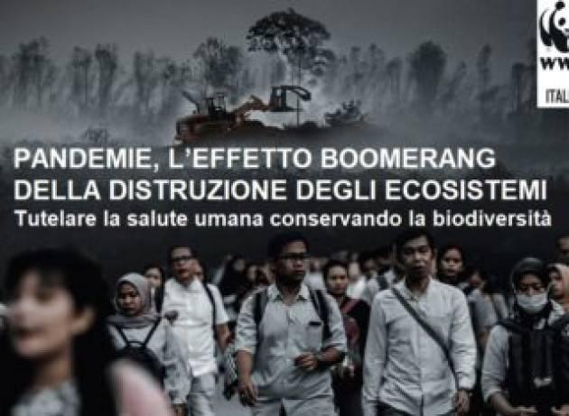 Wwf Italia e coronavirus: ''Legame strettissimo tra pandemie e perdita di natura''