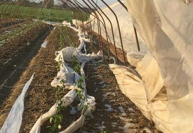 Coldiretti Maltempo, bufere di vento nella campagna casalasca