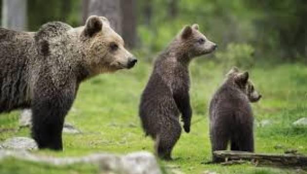 La Regione Lazio mette in pericolo orso marsicano