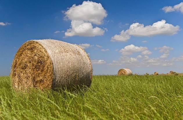 LNews-AGRICOLTURA, ROLFI: 1,7 MILIONI PER 63 NUOVE IMPRESE UNDER 40. MIGLIOR ANTIVIRUS POSSIBILE