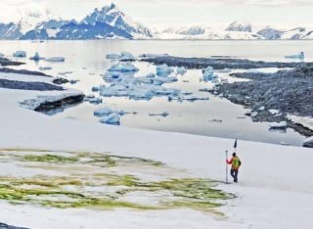 Neve verde sull'Antartide - VIDEO