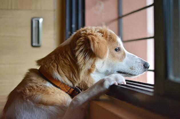 Ansia da separazione cane post lockdown: 5 modi per evitarla
