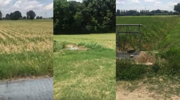 Cremona Mega Fotovoltaico a terra. Luigi Mantovani : Ma si fora de testa. ME èL VO'ORI MIA (Video)