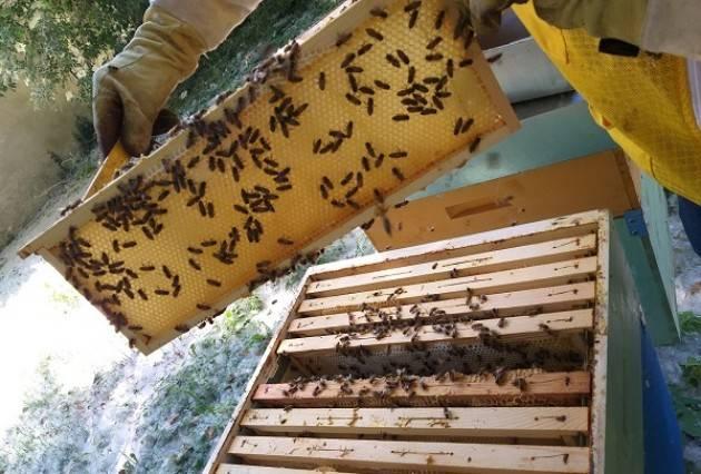 Come procede l'apiario collettivo del progetto Cremona Urban Bees situato presso il Museo del Cambonino