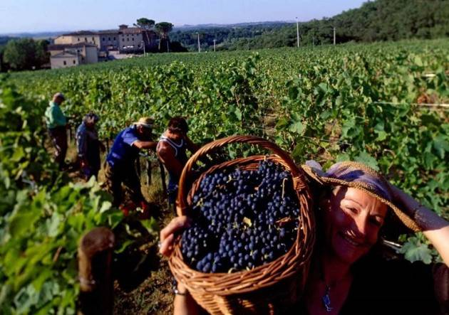 LA RACCOLTA DELLE UVE  Vendemmia alle porte, Boselli: 'Preoccupa l'obbligo  di quarantena per chi proviene da Romania e Bulgaria'