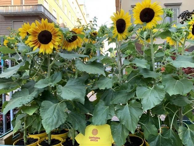 Coldiretti  Campagna Amica aperta per ferie a Cremona,Crema,Casalmaggiore e Soresina