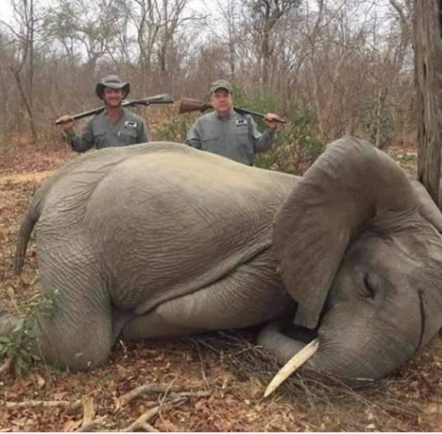 Hanno ucciso un elefante, rediamoli famosi per essere feccia della terra |Carlo Monguzzi (Milano)