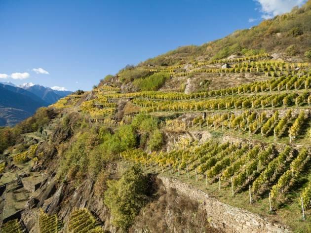 LombNews Montagna, boom di domande per bando terrazzamenti