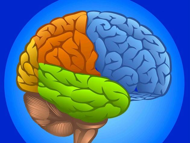 Proteggi il cervello e tieni alla larga il declino cognitivo con un sano stile di vita