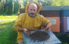 Grave moria di api tra Brescia e Cremona