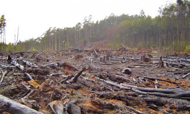 CE, una cooperazione globale contro la deforestazione