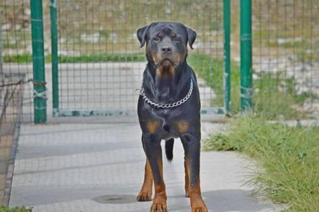 A Milano al via corsi per Patentino cane speciale
