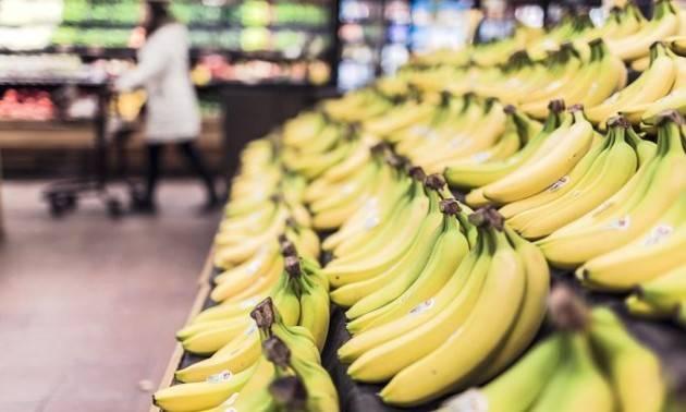 La vera storia dei ''matti di Bruxelles'' che hanno voluto raddrizzare le banane