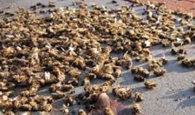 Moria di api, regione risponde al M5S. Degli Angeli (M5S Lombardia): fitosanitari nel mirino.