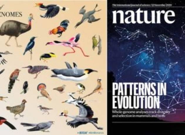 Rivelati i segreti genetici dell'evoluzione di uccelli e mammiferi