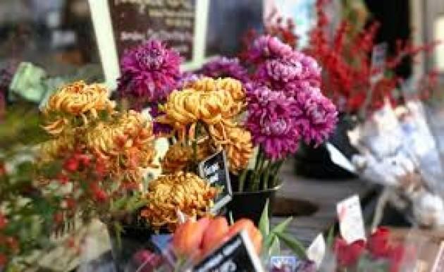 Floricoltura colpita dall'emergenza, a Ognissanti ''crollo delle vendite di crisantemi''