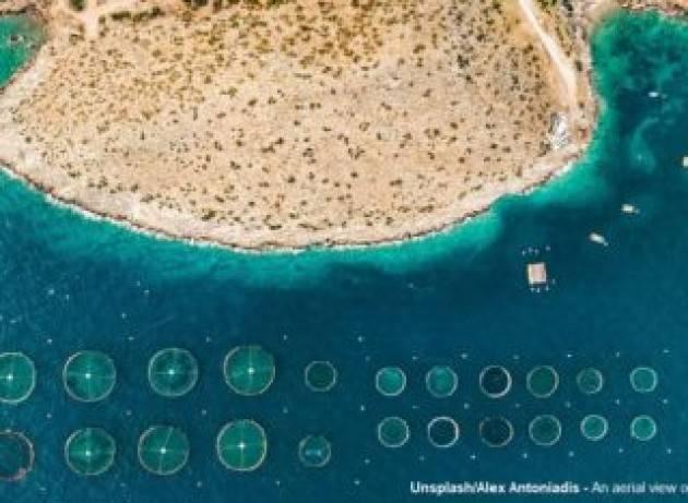 La fame si batte sotto il mare, coltivando gli oceani