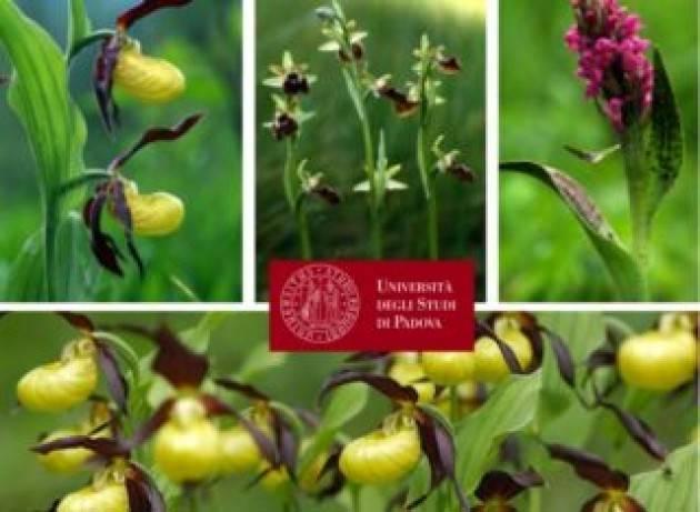 Il pericoloso destino delle orchidee alpine in un mondo che cambia