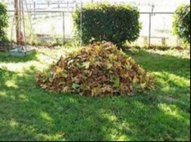 Cremona Scarti vegetali: raccolta porta a porta anche durante la stagione invernale . Frequenza da settimanale a mensile