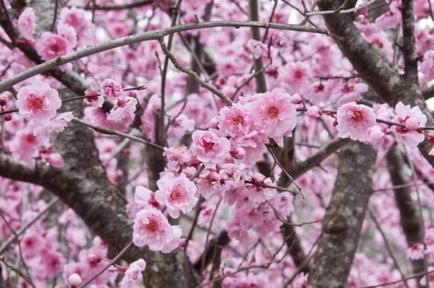 Cremona Vincenzo Montuori presenta La poesia classica giapponese