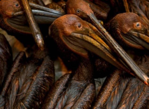Prima di andarsene, Trump rottama anche le protezioni degli uccelli migratori